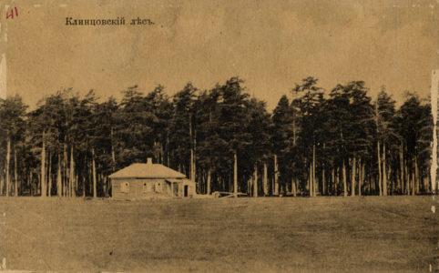 Клинцовский лес. Фото с открытки 1910-х гг. Источник: www.humus.livejournal.com