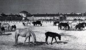 Хреновской конный завод. В варках ранней весной